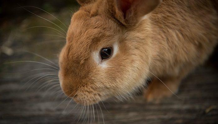 Mơ thấy thỏ có liên quan đến con số nào?