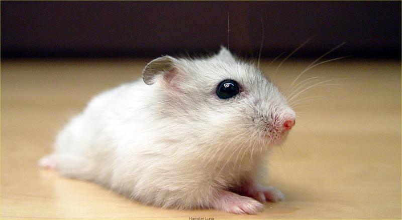 Mơ thấy chuột đánh con gì – giải mã giấc mơ thấy chuột