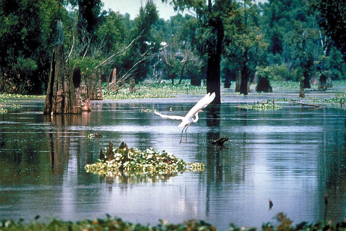 Mơ thấy đầm lầy là điềm báo gì? Nên đánh lô đề con gì ?