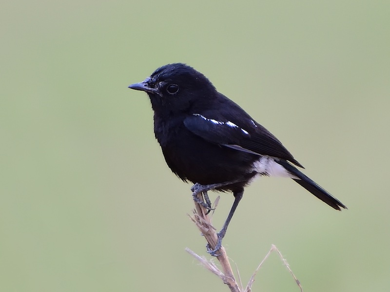 Nằm mơ thấy chim đen nói chuyện có ý nghĩa gì? Tốt hay xấu?