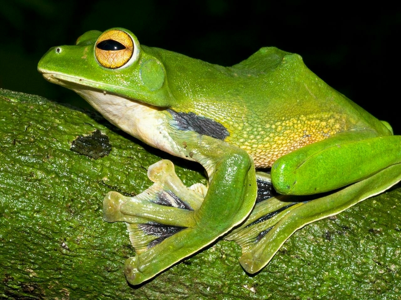 Nằm mơ thấy con ếch có ý nghĩa gì? Đánh lô đề con gì?
