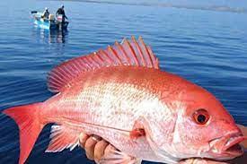 Nằm mơ thấy cá hồng là điềm gì, lành hay dữ? Là số mấy?